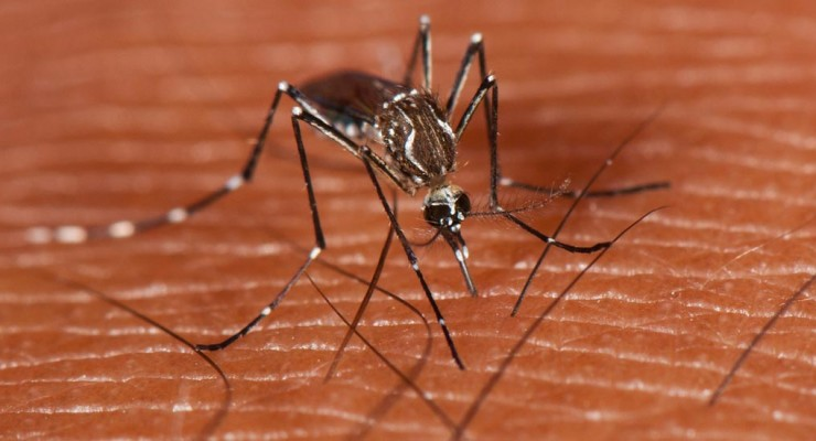 aedes-aegypti-mosquito-HP